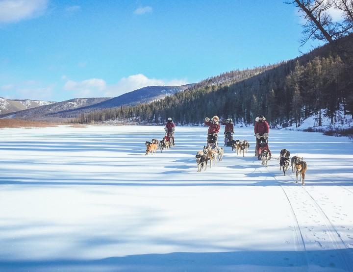 Maak een hondensledetocht door Mongolië
