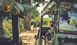 Alles over backpacken door Sri Lanka