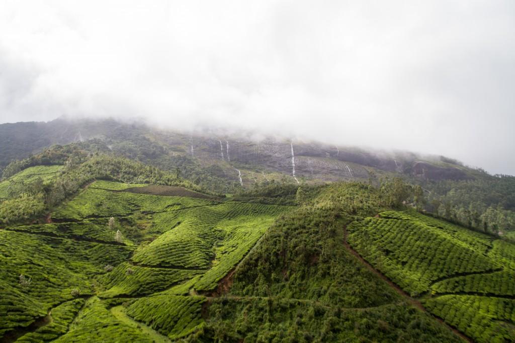 Wolken boven de intens groene theevelden van Munnar