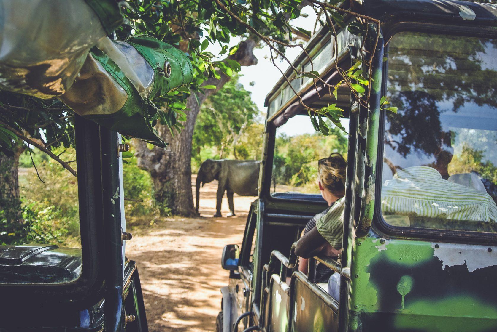 Tijdens de safaries kom je zelfden wilde dieren tegen