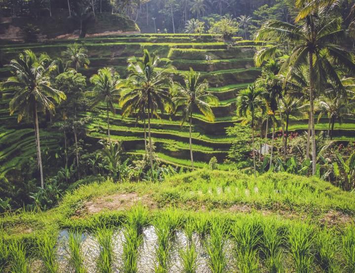 Waarom Ubud het mooiste plekje op Bali is