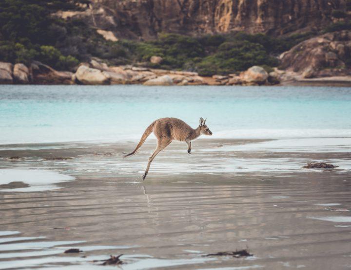 Werk vinden in Australië doe je met deze 7 tips