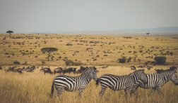 De 3 mooiste nationaal parken van Kenia