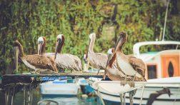 Low budget reisgids voor de Galapagos Eilanden