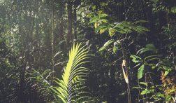 De highlights van Maleisisch Borneo