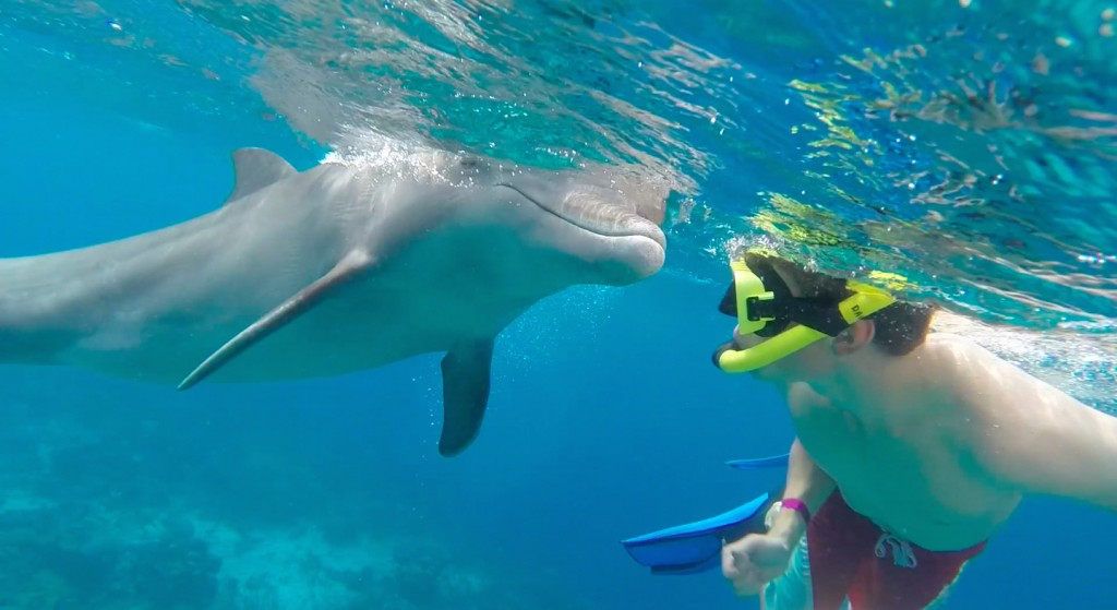 Zwemmen met dolfijnen op open zee... dat kan bij de Dolphin Academy op Curaçao!