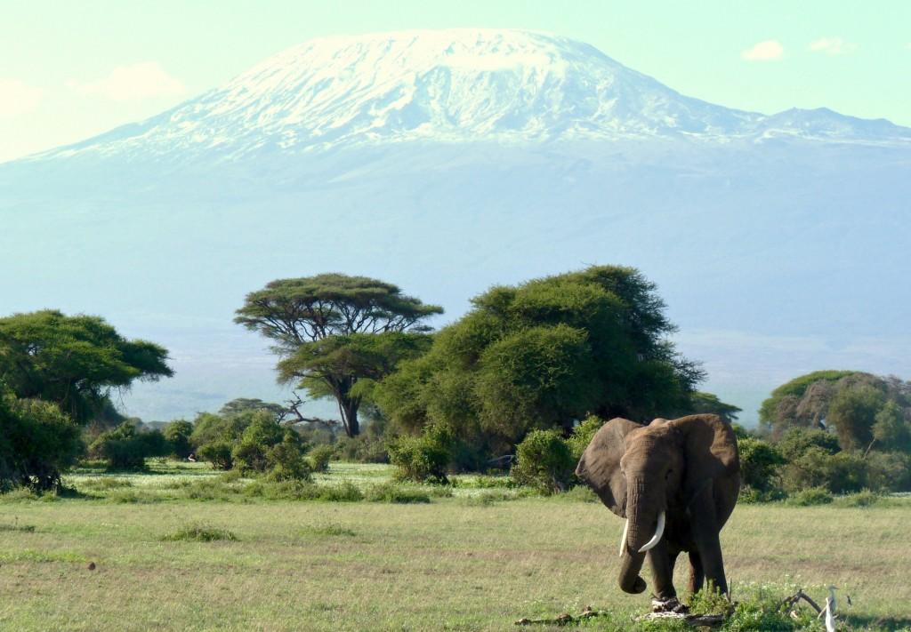 kenia-tanzania-kilimanjaro-olifant