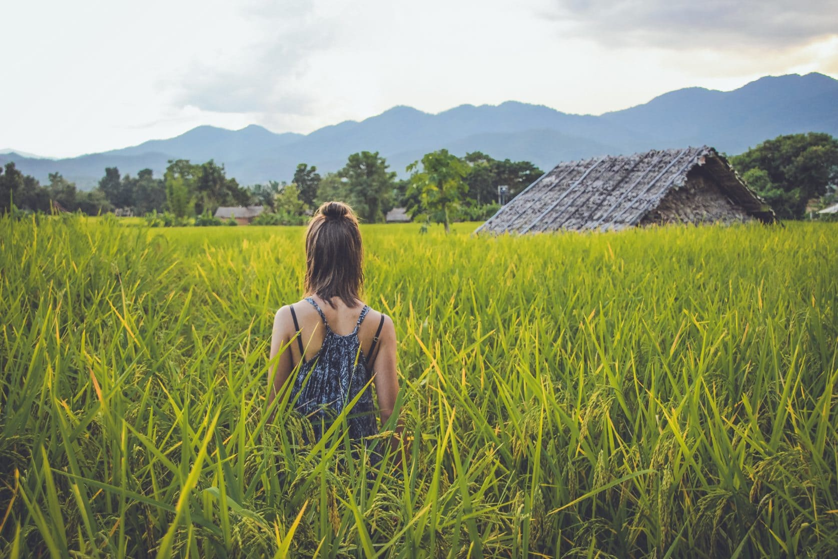 pai girl rice fields
