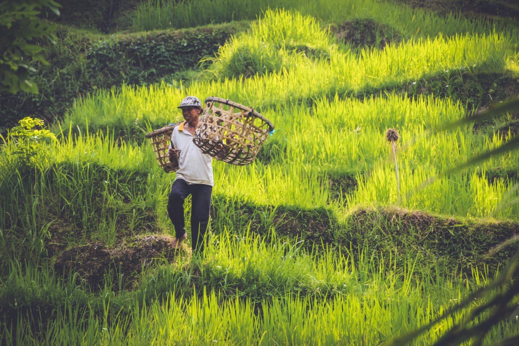 activiteiten op Bali