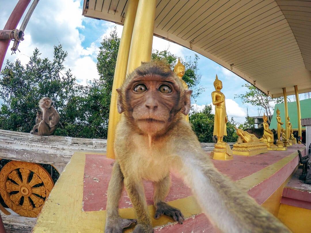 Tiger cave tempel beklimmen