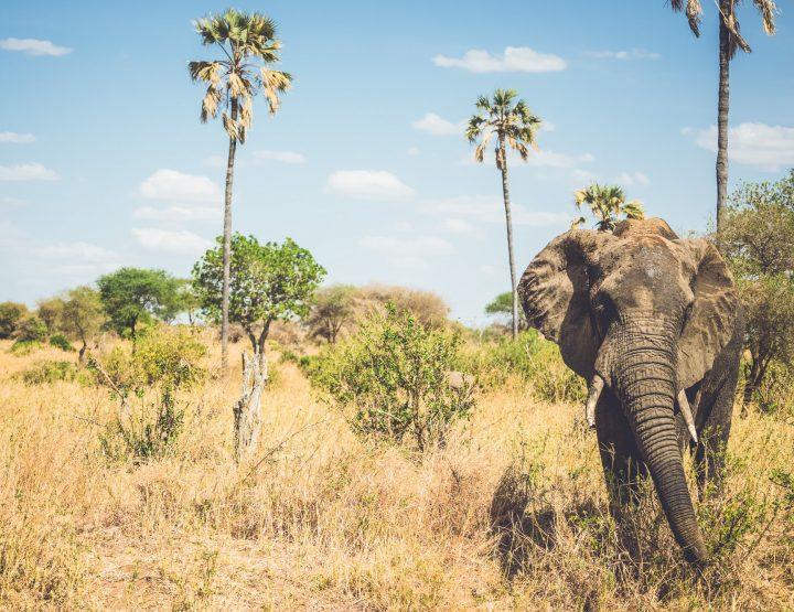 Dit zijn de mooiste nationale parken van Tanzania