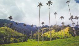 Valle de Cocora Hike: alle info + handige tips